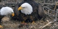 Decorah North Nest Eagles