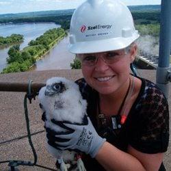 Banding falcons at Xcel Energy