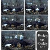 Courtship at N2B