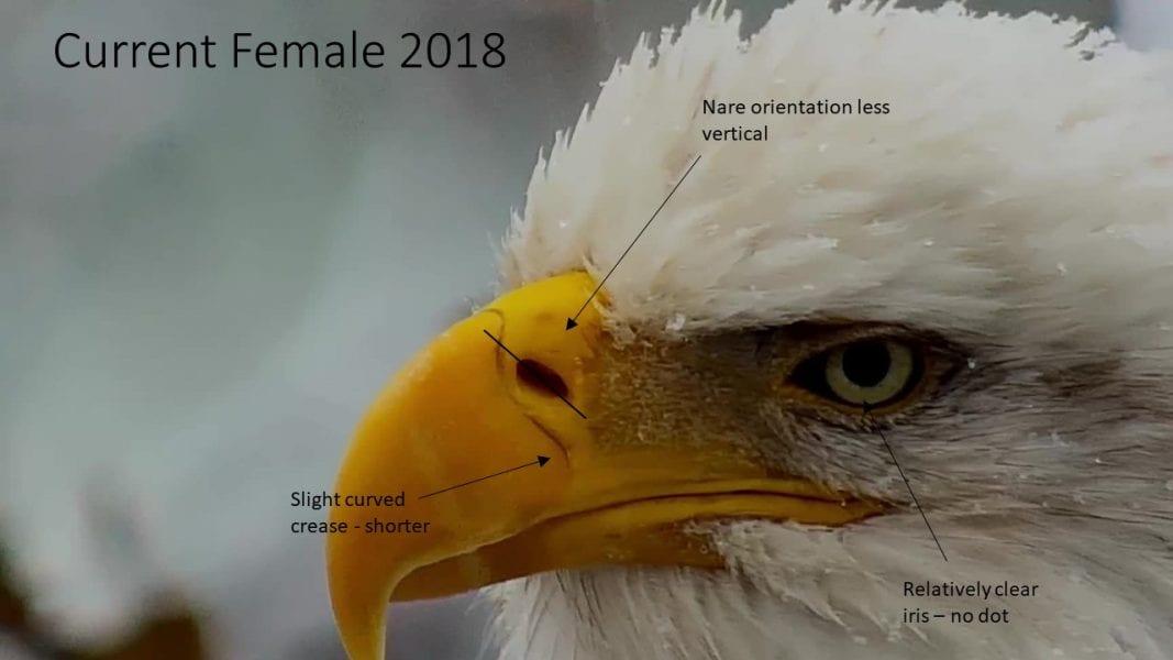 DNF (Decorah North Female)