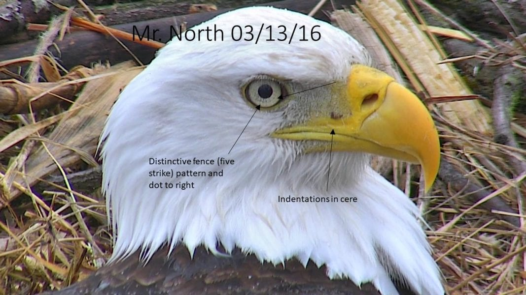 March 13, 2016: Mr. North