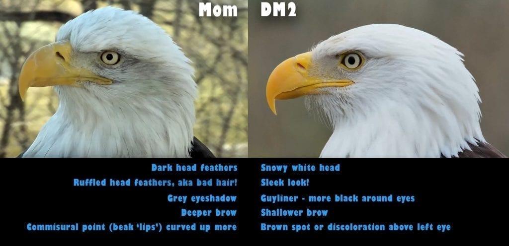 Decorah Eagles: Mom and DM2