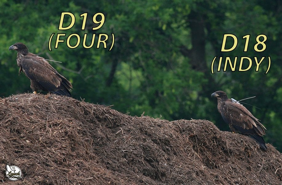 D18, INDY, and FOUR on July 6, 2014