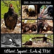 April 24, 2019: North Nest - whee, squee, look at me!