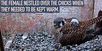 Wisconsin Kestrels