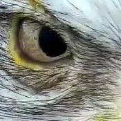 January 29, 2020: Mom's eye up close