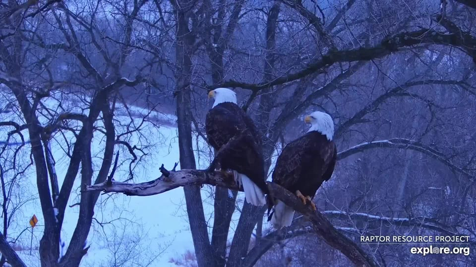 January 31: Mom and DM2 perch together near N2B