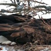February 19, 2020: DNF slumbers on the nest