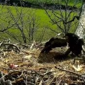 May 11, 2020: DN12 responds to a squirrel at the North Nest