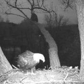 Sunday, October 25: DM2 delivers a stick under Mom's watchful eye
