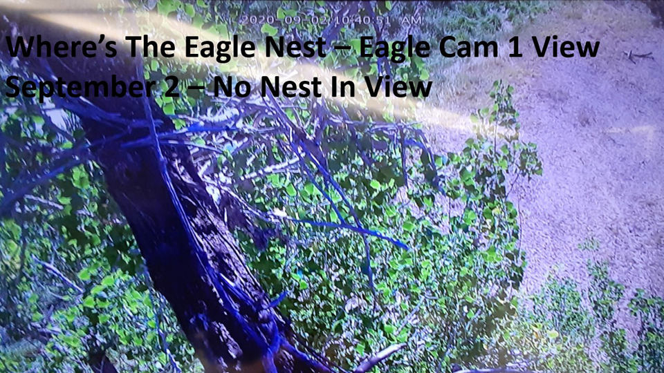 September 2, 2020: Eagle Cam 1 View. No nest in sight!