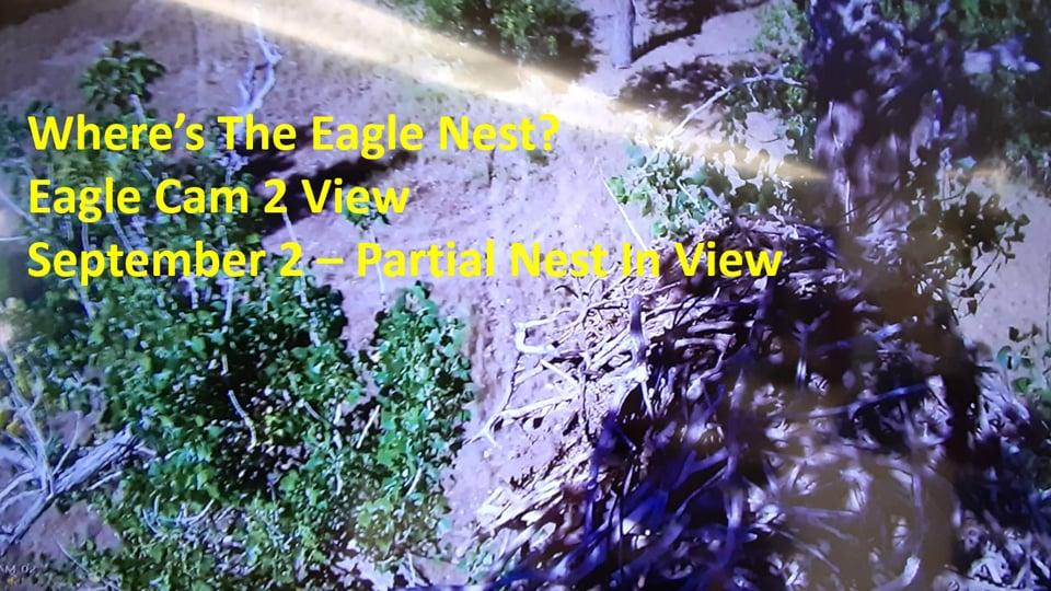 September 2, 2020: Eagle Cam 2 View. Still no nest in sight!