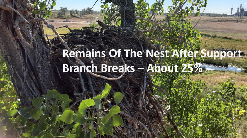 September 2, 2020: About 25% of the nest was left after the branch broke.