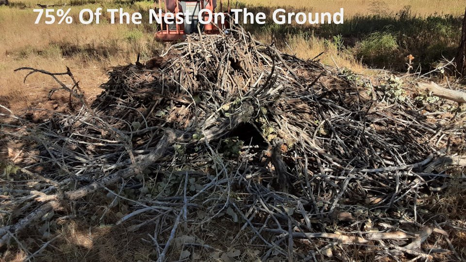 The remaining 75% of the FSV nest on the ground!
