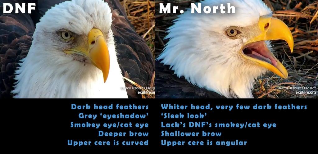 Decorah North Bald Eagles: DNF and Mr. North