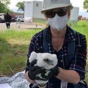 Newsletter 2020: Brenda Geisler holds a nestling falcon