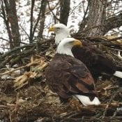 January 14, 2021: DNF and Mr. North on the North nest