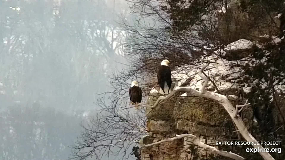 A resident bald eagle pair south of Great Spirit Bluff.