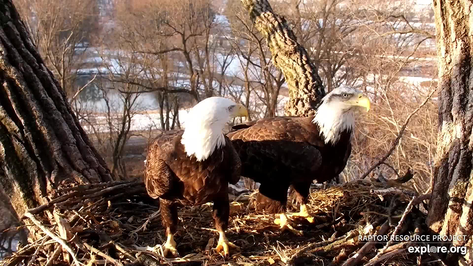 March 4, 2021: Male eagle left, female eagle right