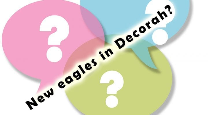 Your questions, answered: new eagles in Decorah?