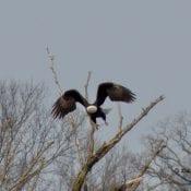 March 7, 2021: Mom flying off a tree near N3.