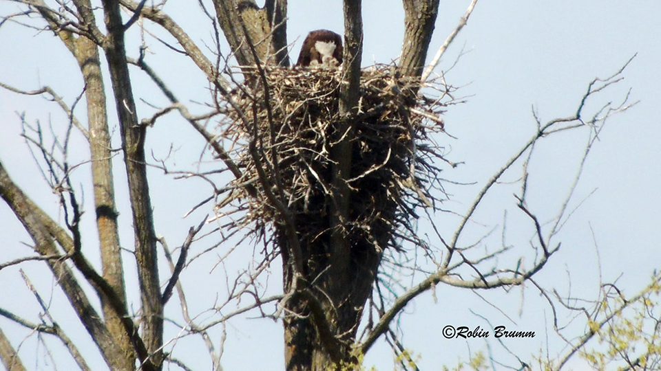 April 19, 2021: Robin sees Mom feeding three bobbleheads!