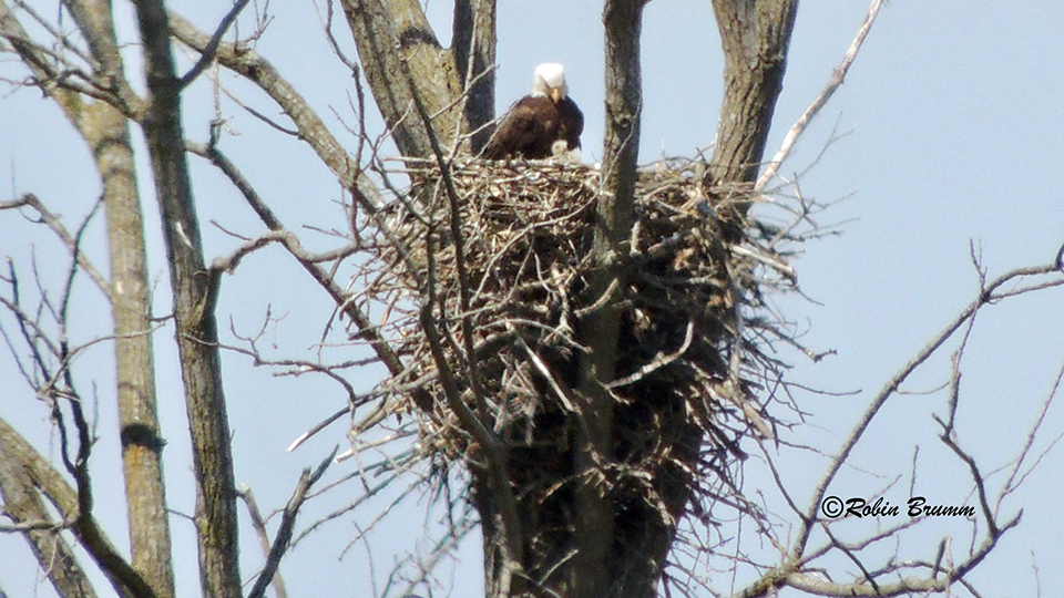 April 18, 2021: Robin's Day Trip - Mom and an eaglet