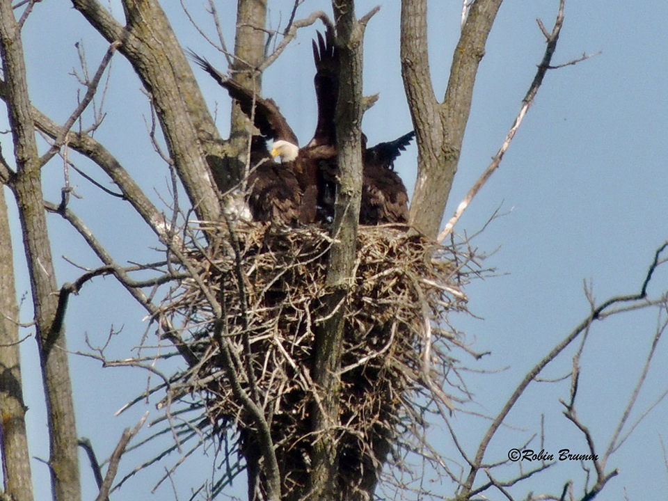 May 2021: A nest full of wings!