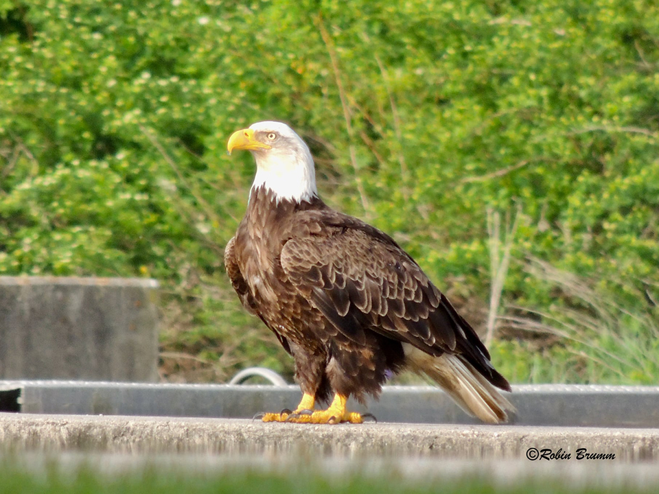 May 2021: Mom at the Hatchery