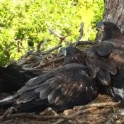 June 22, 2021: DN13 and DN14 relax in the North Nest hammock