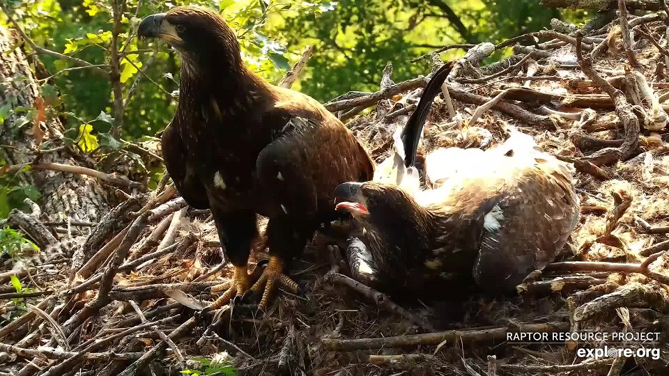 July 6, 2021: DN13 and DN14 in the nest